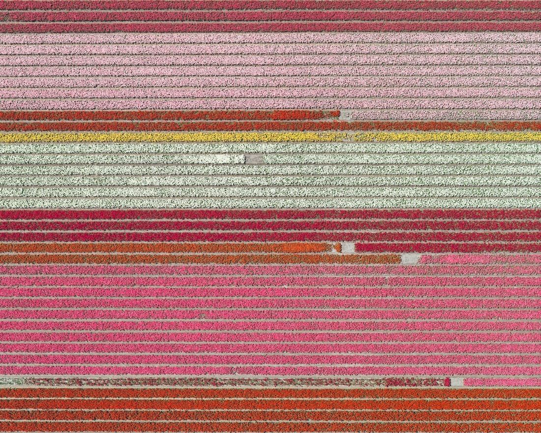 Aerial Views, Tulip Fields 05,Bernhard Lang,Photography