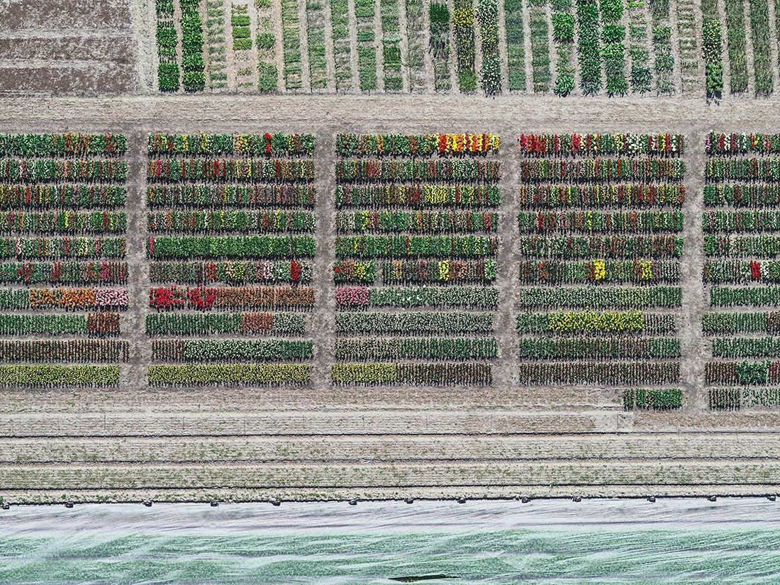 Aerial Views, Tulip Fields 08,Bernhard Lang,Photography