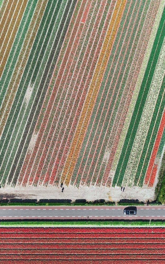 Aerial Views, Tulip Fields 10