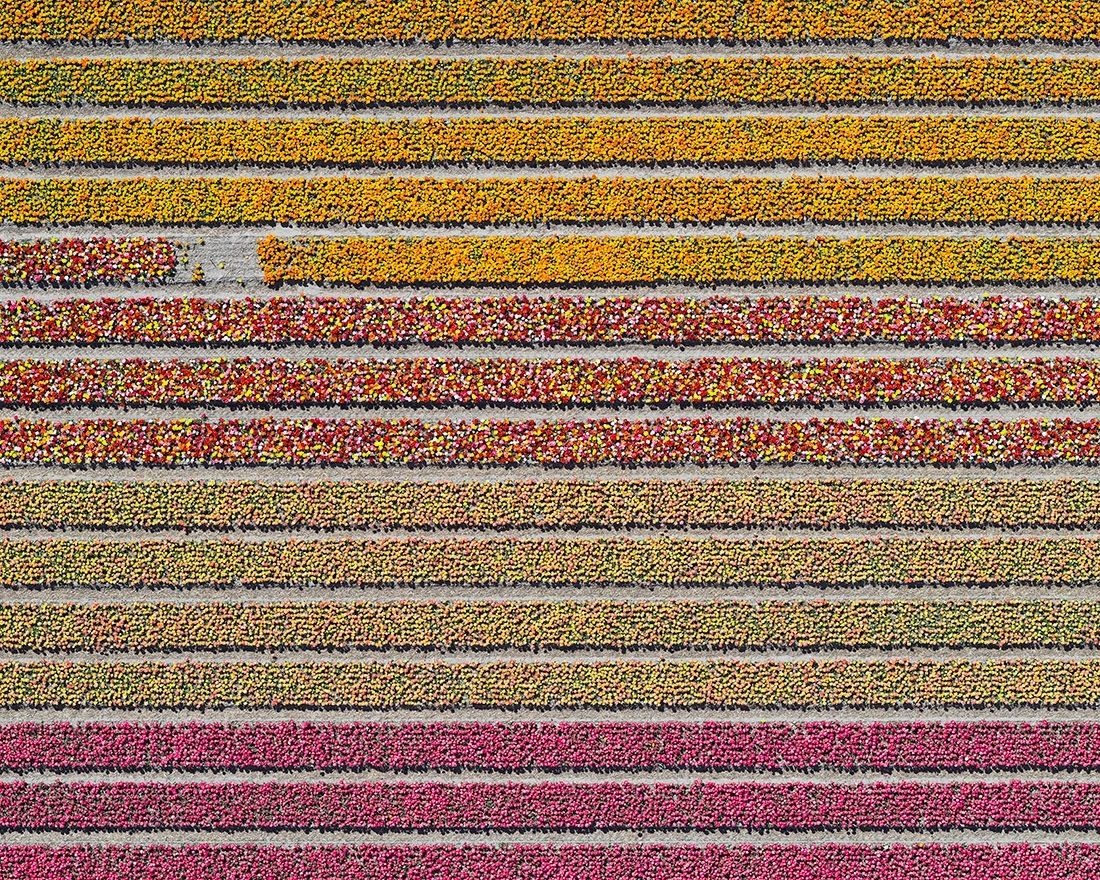 Aerial Views, Tulip Fields 16,Bernhard Lang,Photography