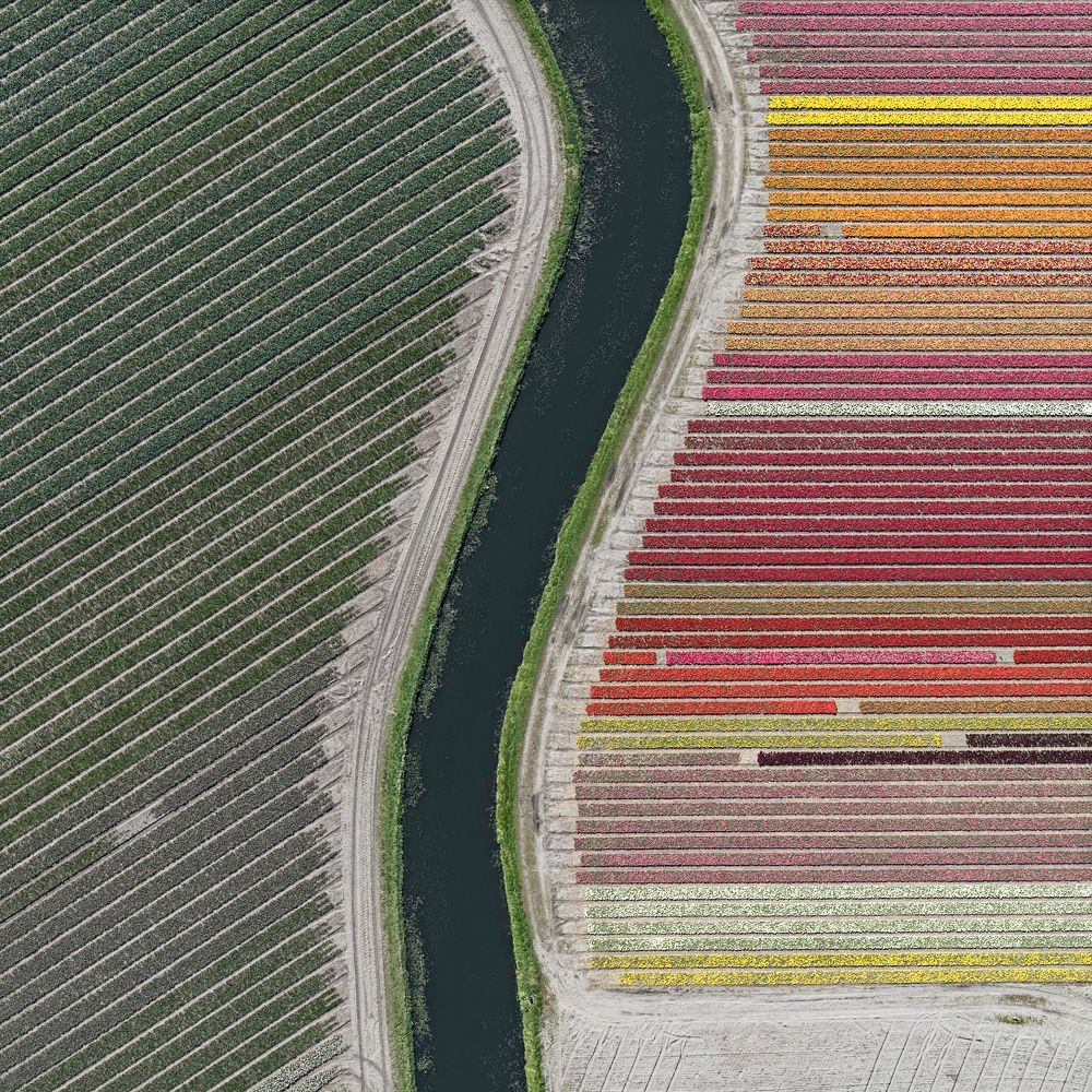 Aerial Views, Tulip Fields 27,Bernhard Lang,Photography