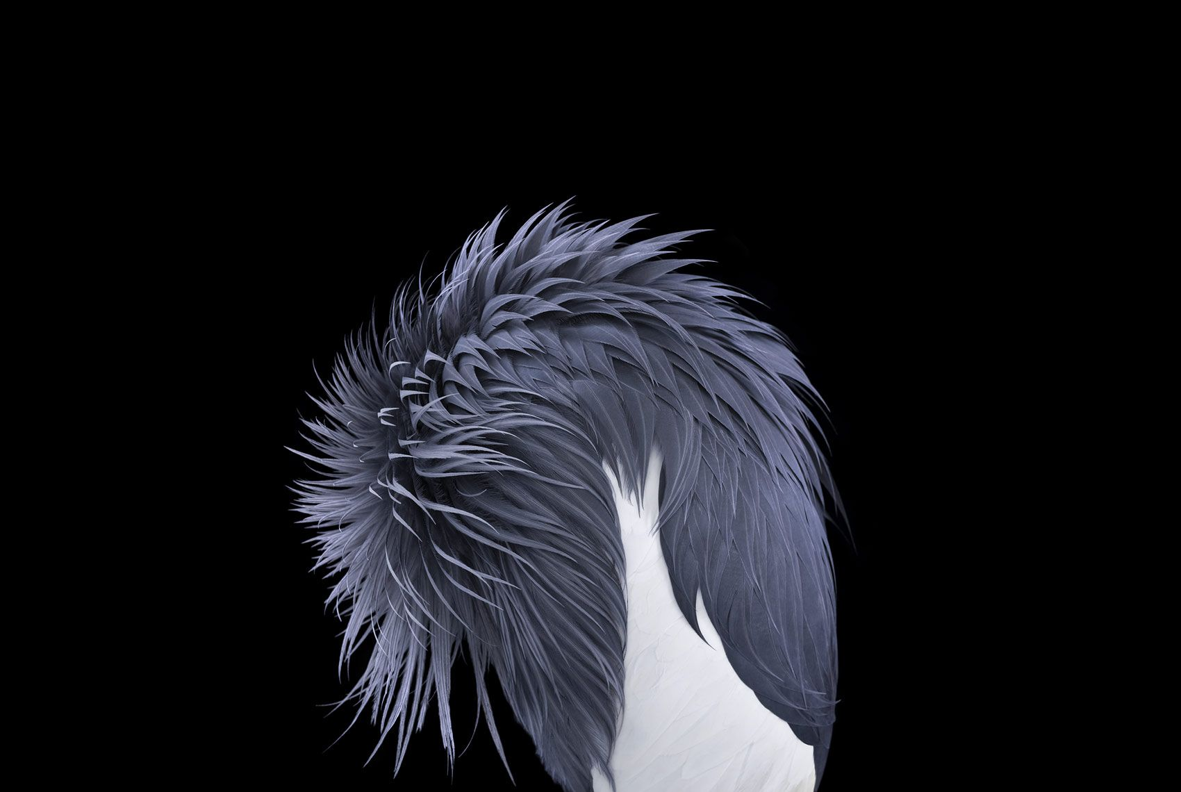 African Crowned Crane #4,  Los Angeles, CA, 2011,Brad Wilson,Photographie contemporaine