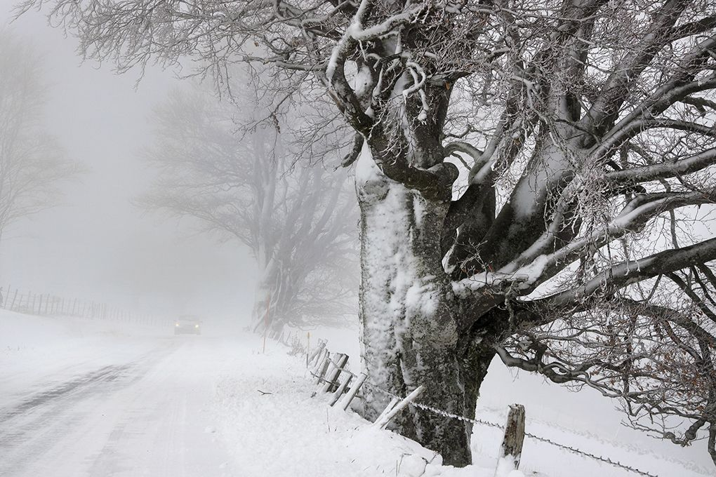 Beeches on the road - Christophe Jacrot - Photography