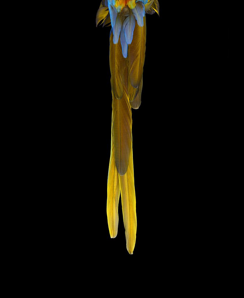 Catalina Macaw #3, Albuquerque, NM, 2016,Brad Wilson,Photography