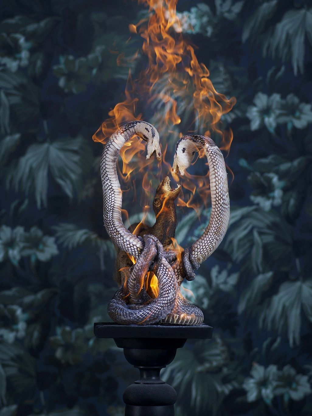 Cobras and Mangoose, série Residence of Impermanence,Christian Houge,Photographie contemporaine