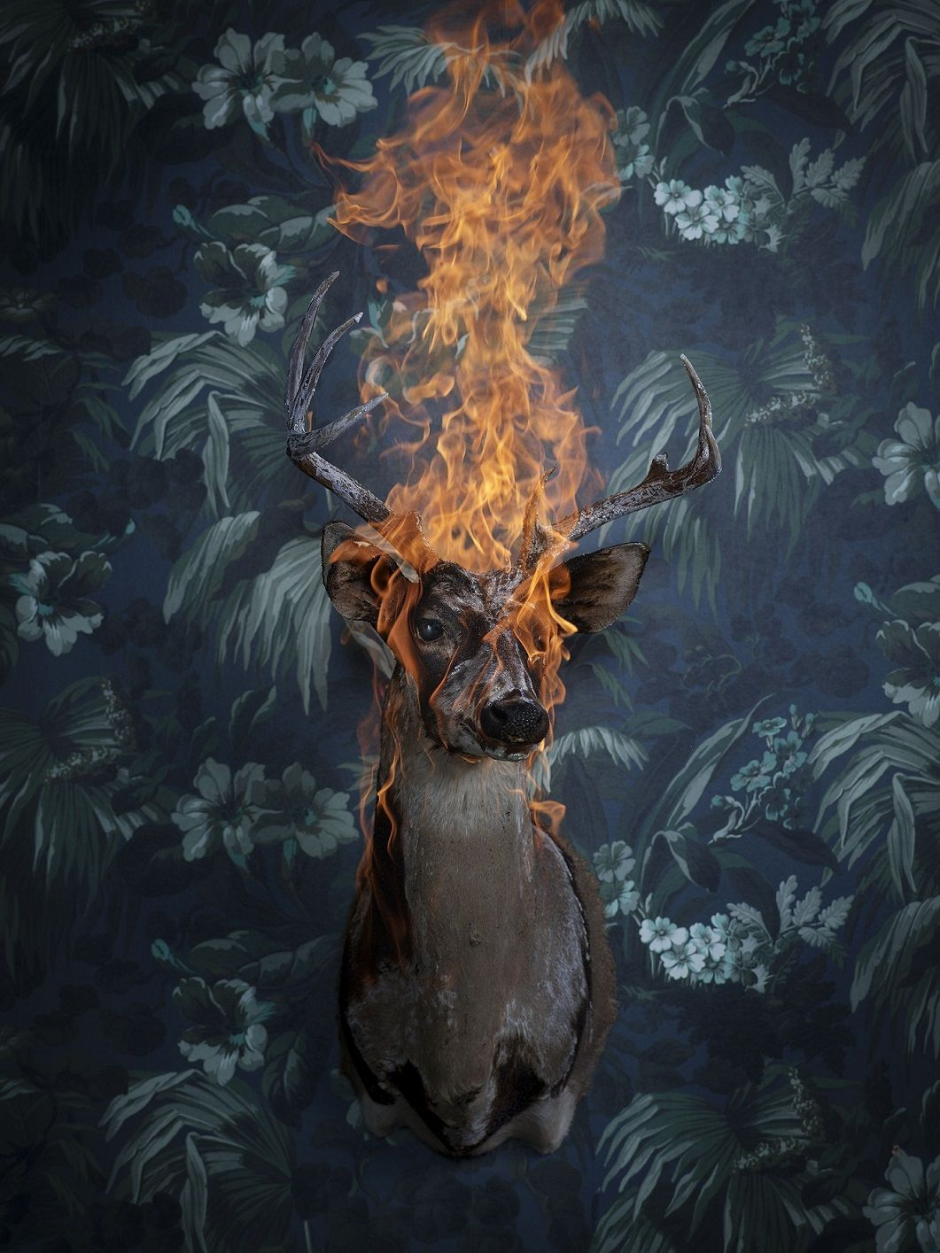 Photography - Christian Houge - Deer 2, Residence of Impermanence series
