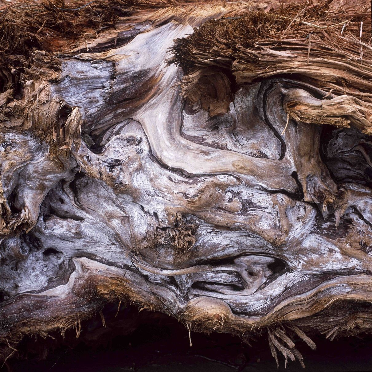 Driftwood,Luca Marziale,Photographie