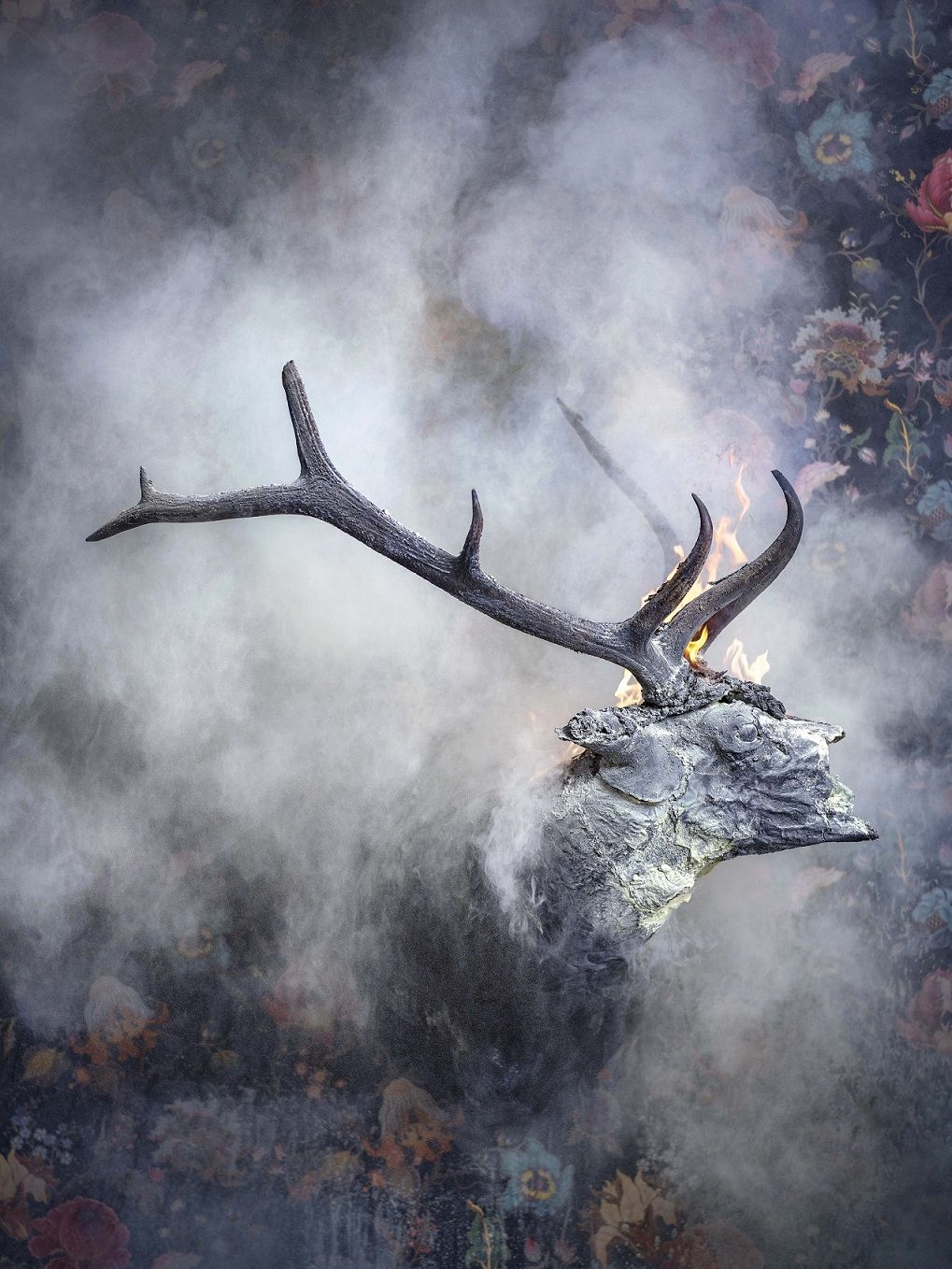 Elk 2, Residence of Impermanence series,Christian Houge,Photography