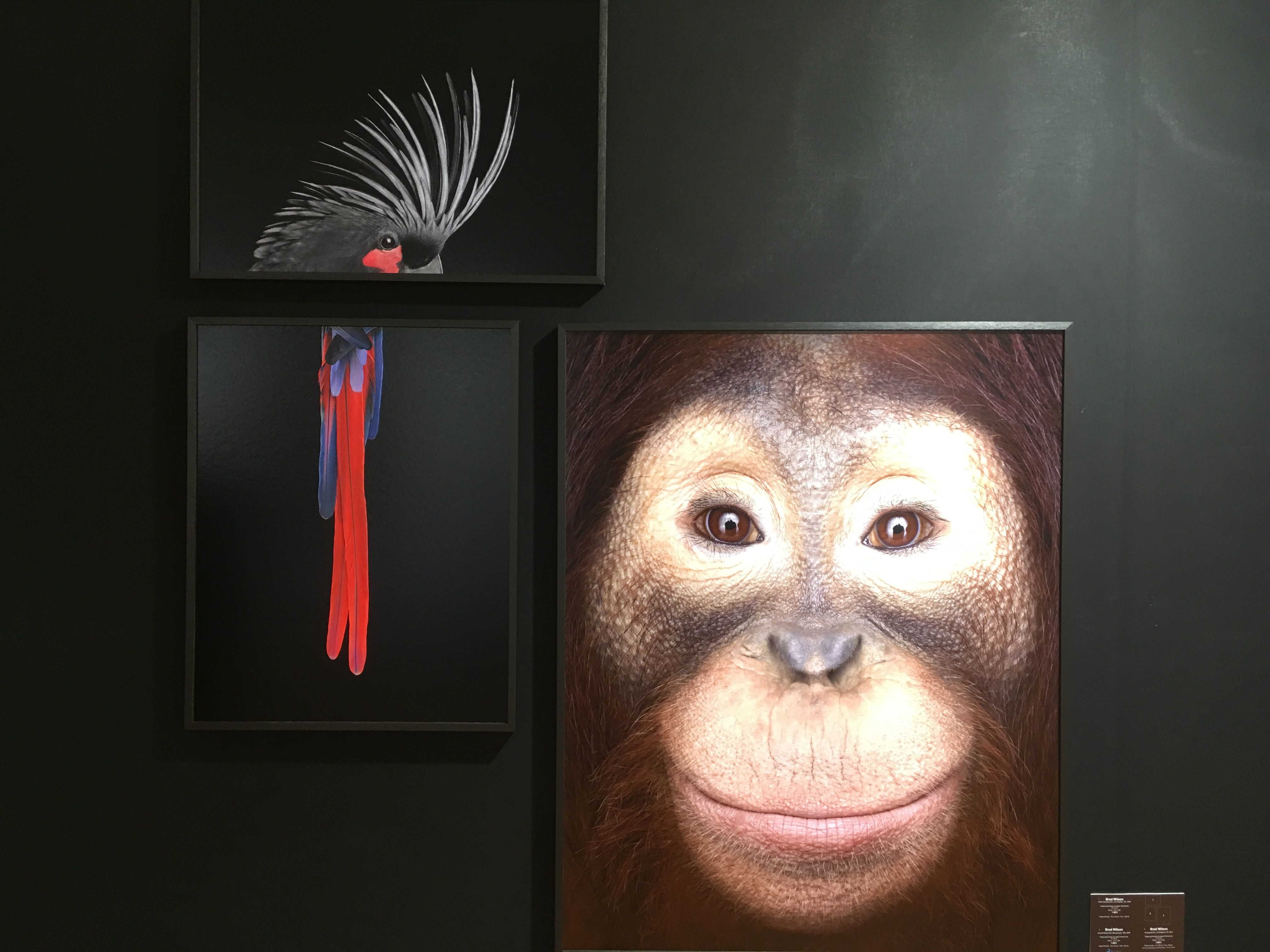 Orangutan #1, Los Angeles, CA, 2011,Brad Wilson,Photography, detail 1