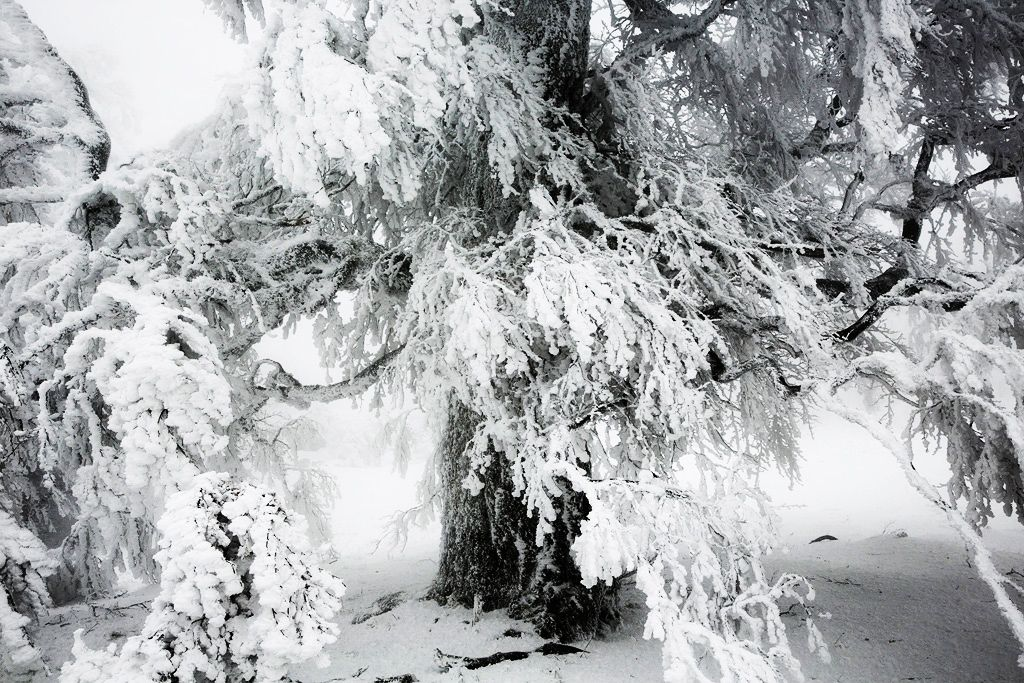 Frozen tree,Christophe Jacrot,Photographie contemporaine