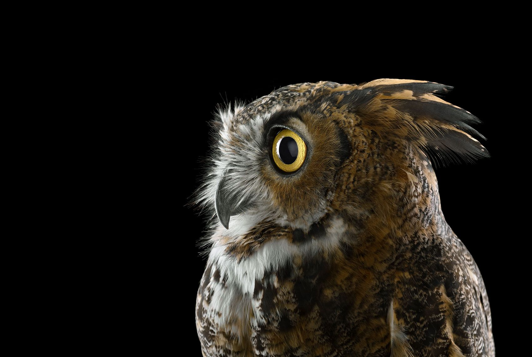 Great Horned Owl #1, Espanola, NM, 2011,Brad Wilson,Photographie contemporaine