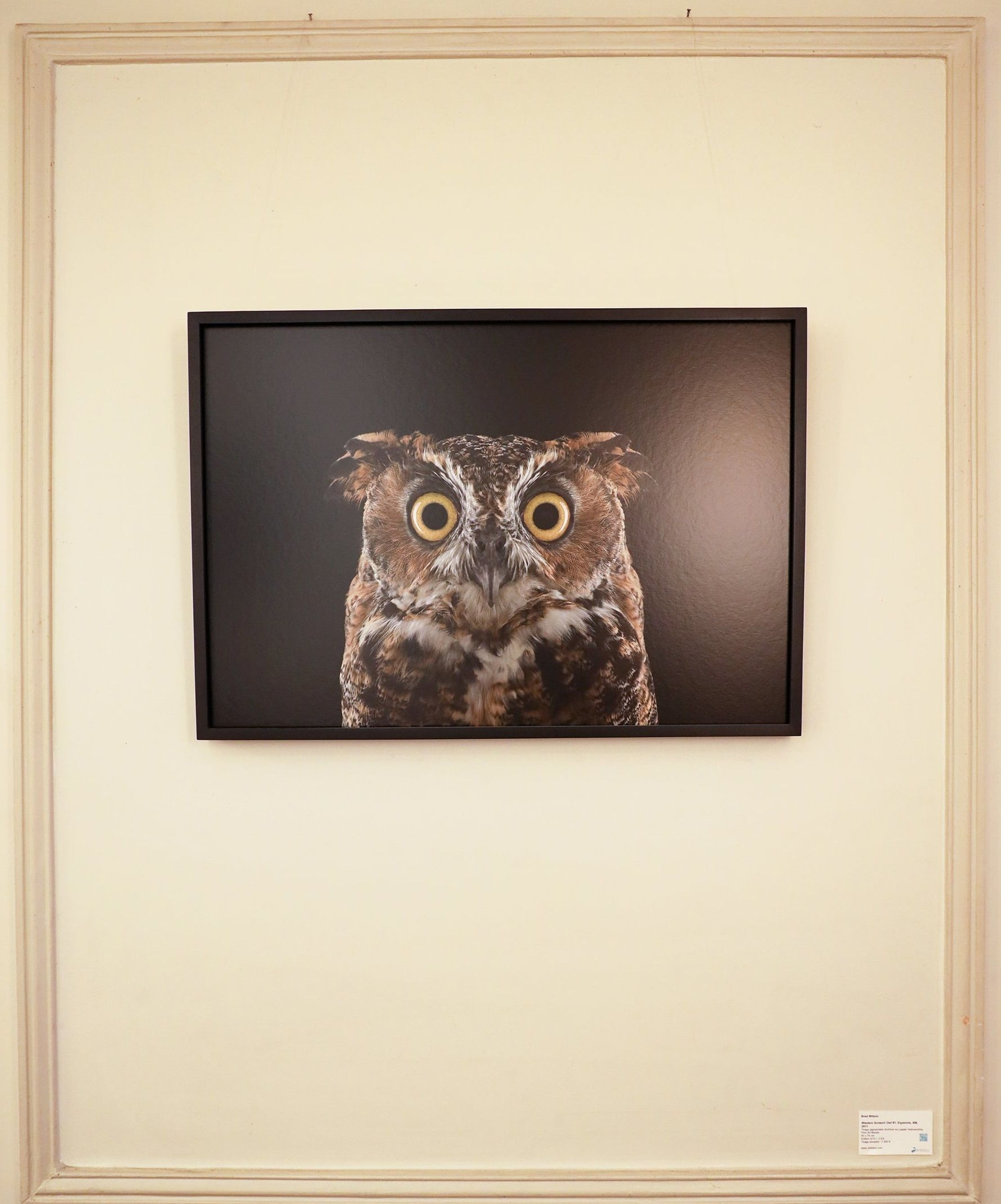Great Horned Owl #3, Espanola, NM, 2011,Brad Wilson,Photography, detail 1