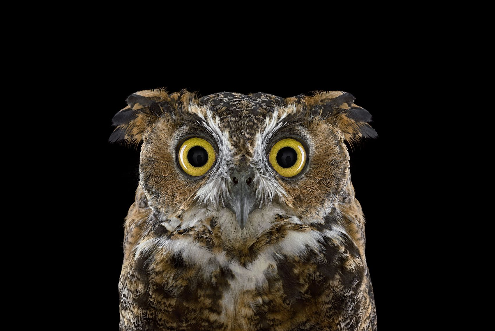 Great Horned Owl #3, Espanola, NM, 2011,Brad Wilson,Photographie