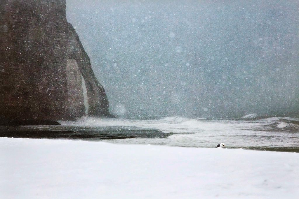 Lost in the snow,Christophe Jacrot,Photography