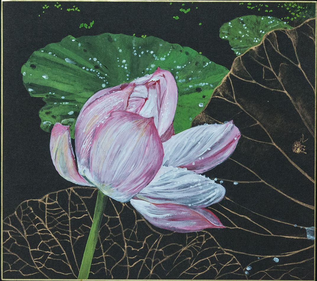Night Lotus