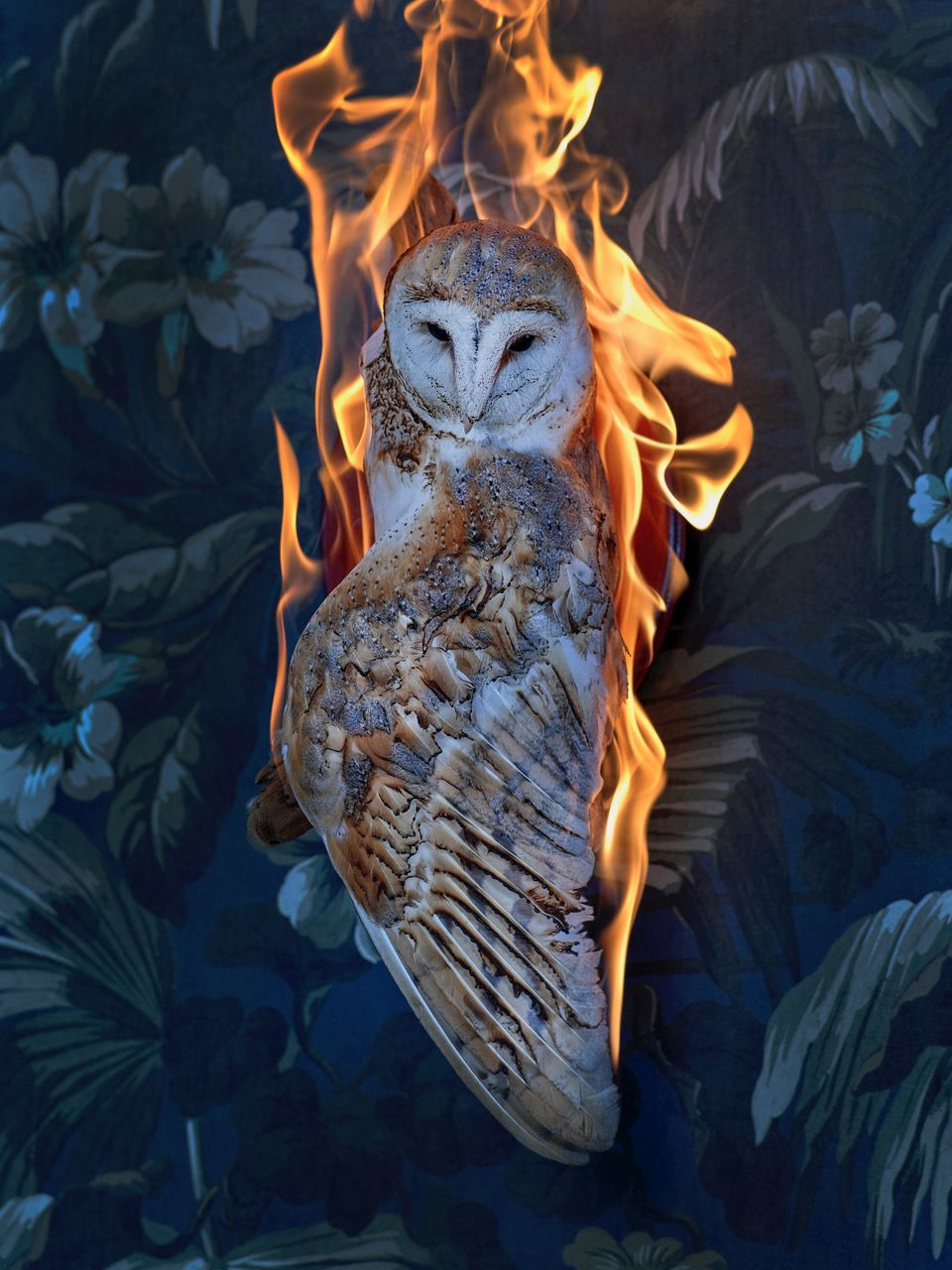 Photography - Christian Houge - Owl, Residence of Impermanence series