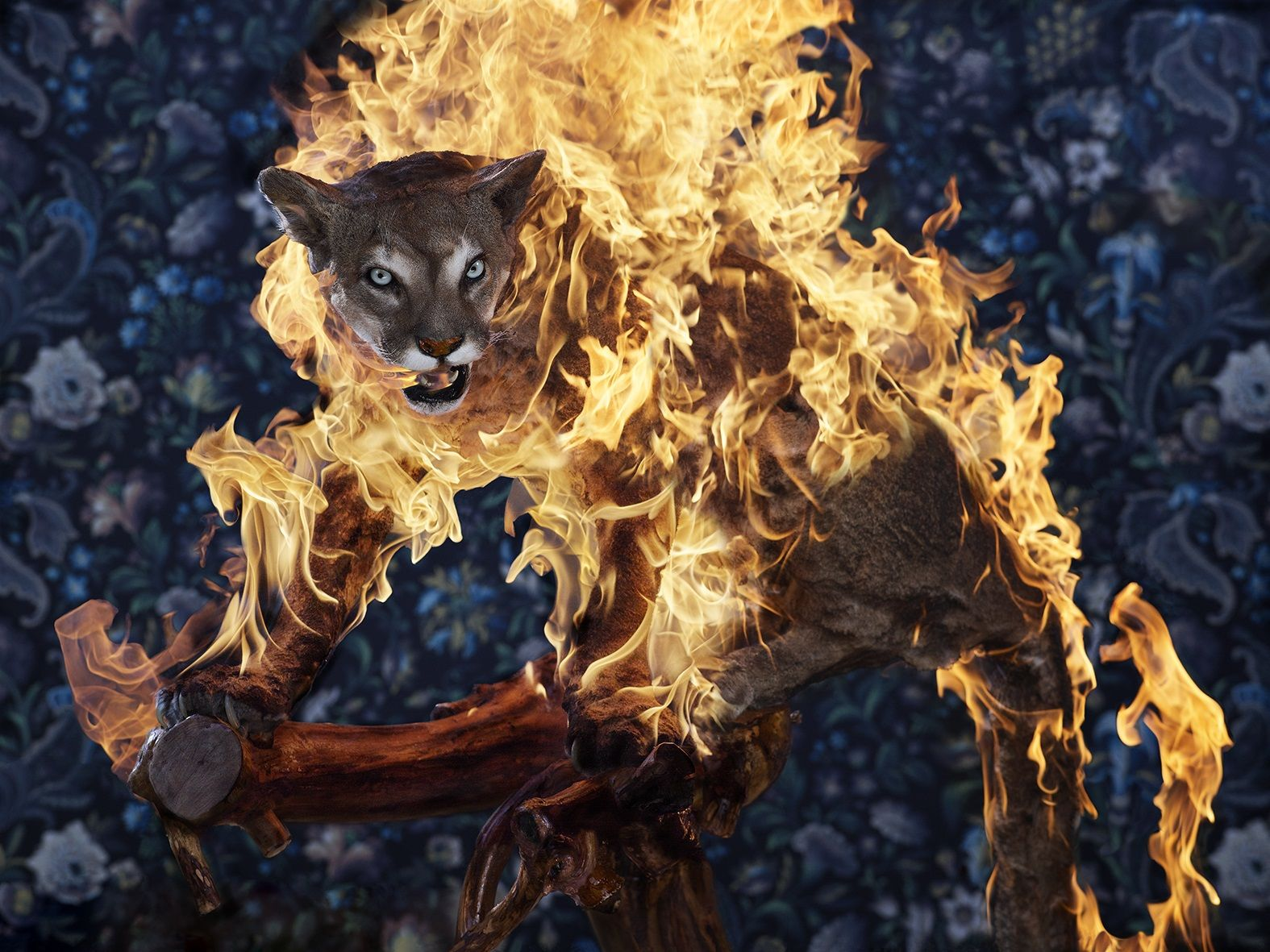 Puma, Residence of Impermanence series - Christian Houge - Photography