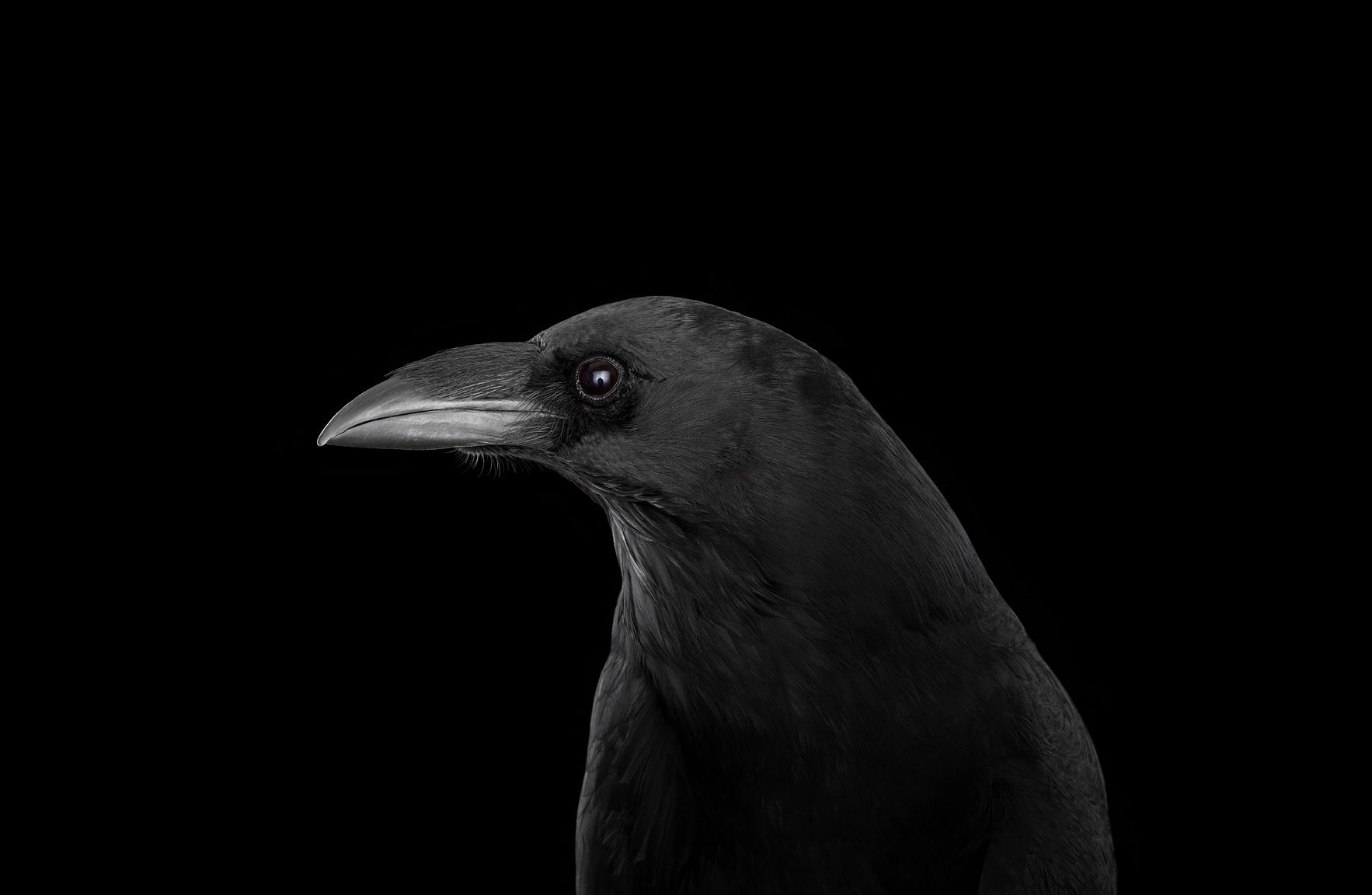 Raven #4, Albuquerque, New Mexico, USA, 2018,Brad Wilson,Photographie contemporaine