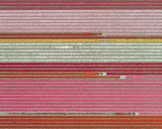 Aerial Views, Tulip Fields 05