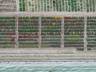 Aerial Views, Tulip Fields 08