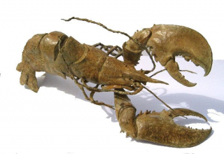 Lobster in Armour