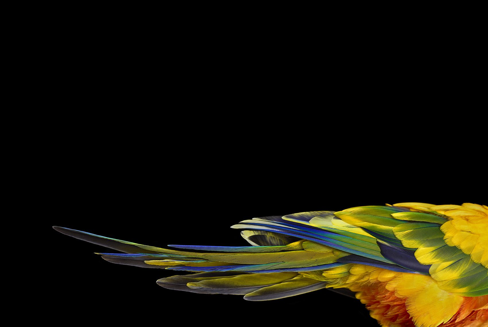 Sun Conure #1, Albuquerque, NM, 2016,Brad Wilson,Photographie contemporaine