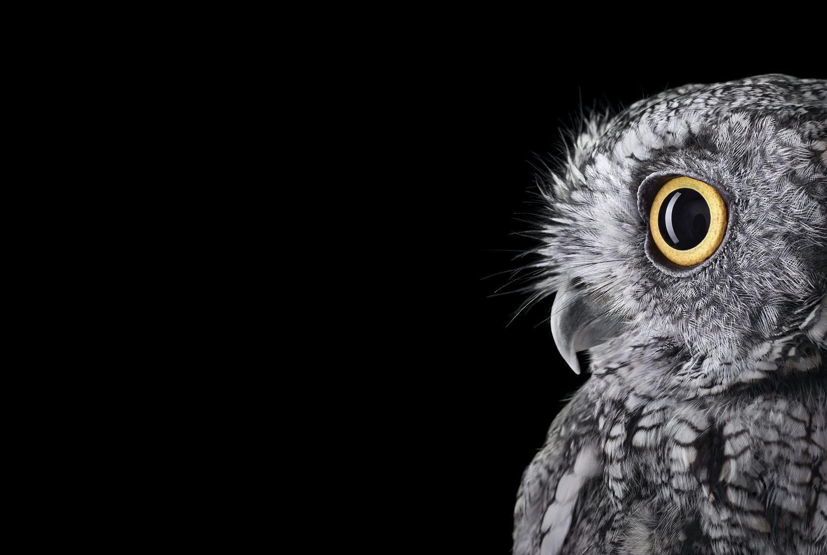 Western Screech Owl #2, Espanola, NM, 2011,Brad Wilson,Photographie contemporaine