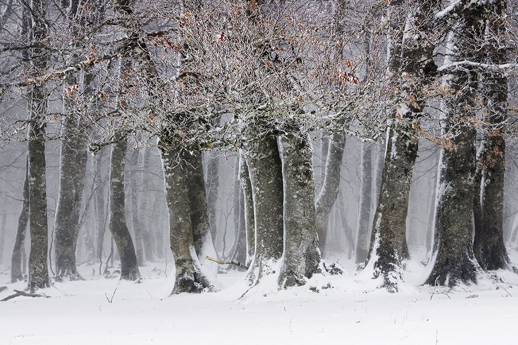 White forest,Christophe Jacrot,Photography