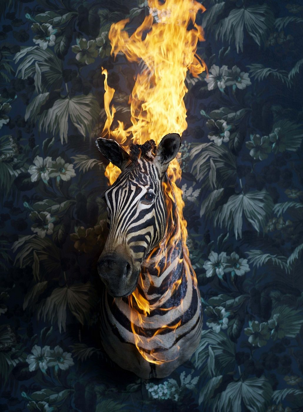 Zebra, série Residence of Impermanence,Christian Houge,Photographie contemporaine